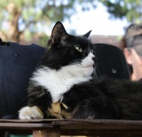 Tatty the Stable Cat